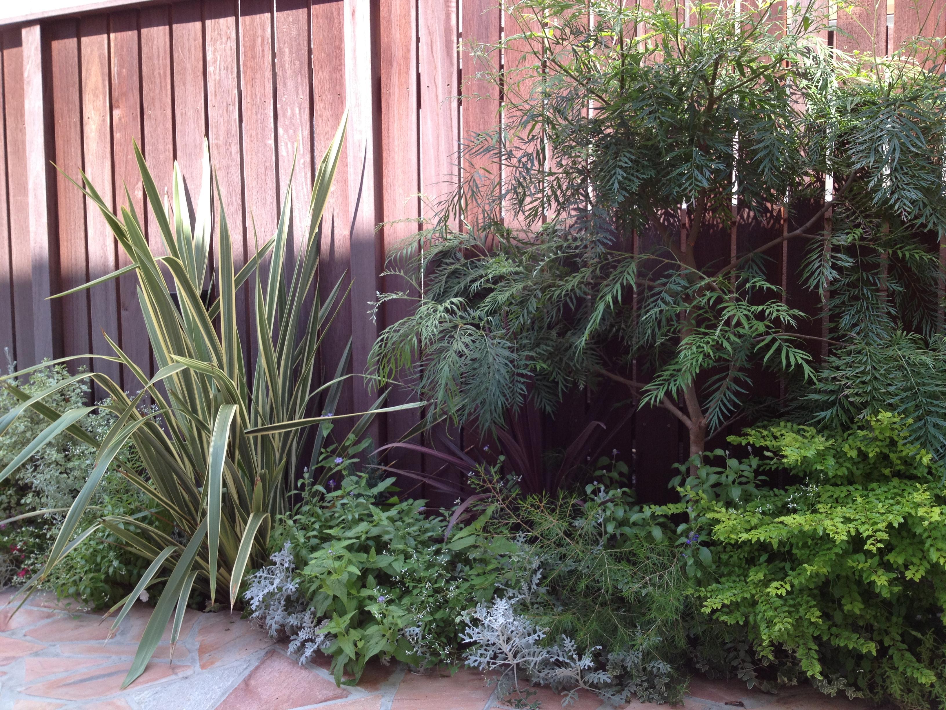 フェンス前の植栽は、決まりますね