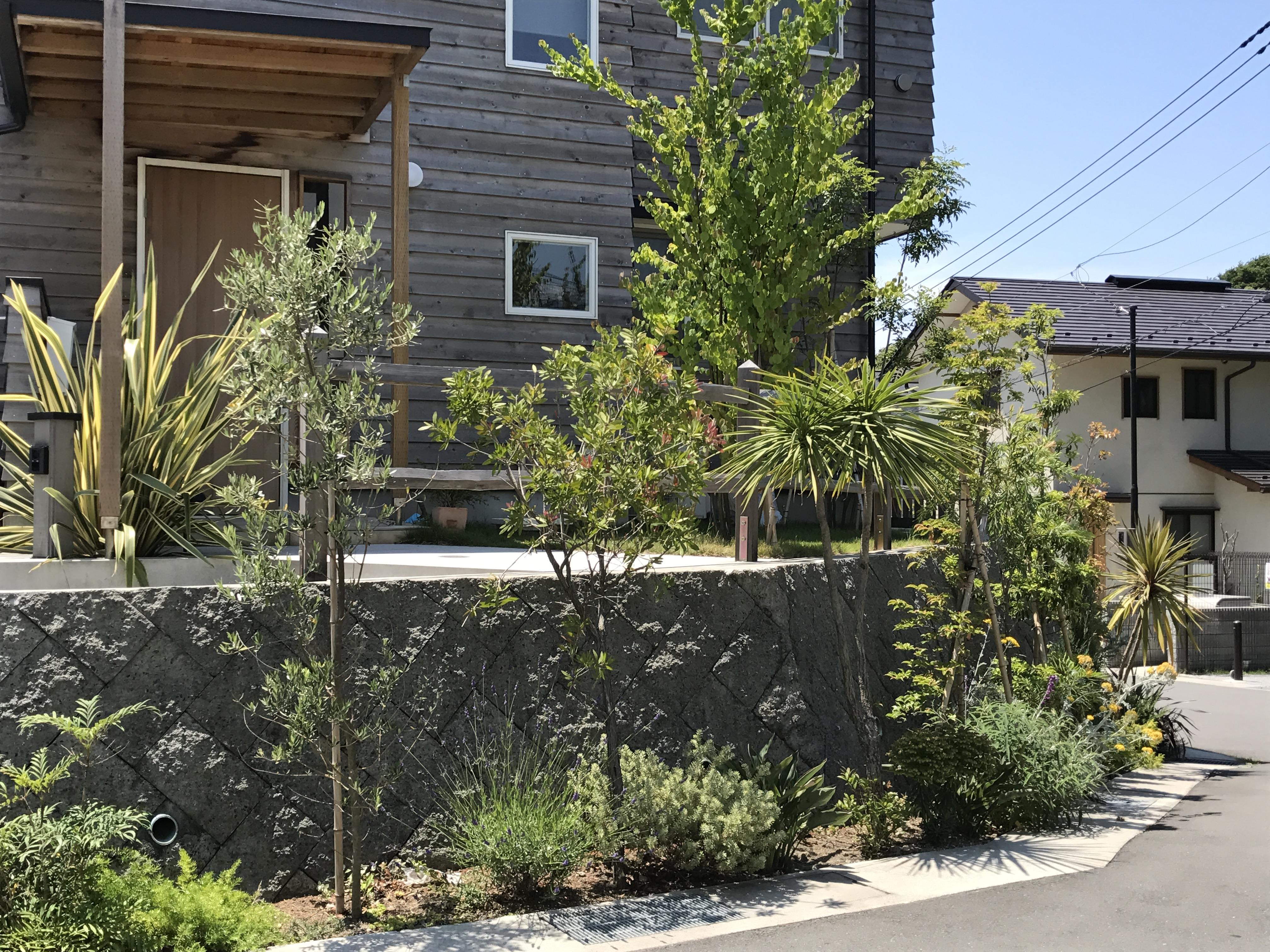 擁壁前の植栽 潮害地域ながらよく育つ