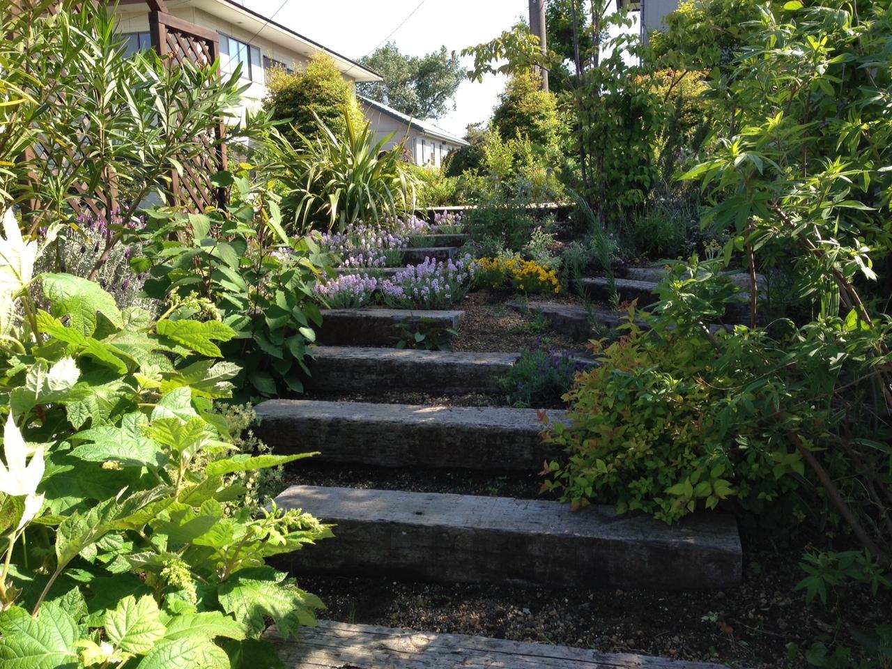 植栽と枕木園路。庭は日々変化しますね